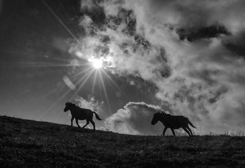 Arijit Adhikary - horse silhouettes