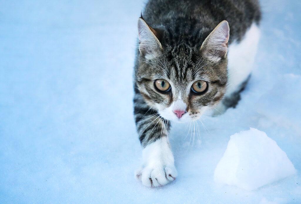 svklimkin - Cat
