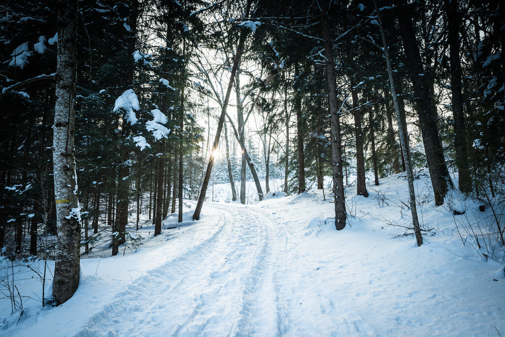 Mundl_Photographie - snowy forest