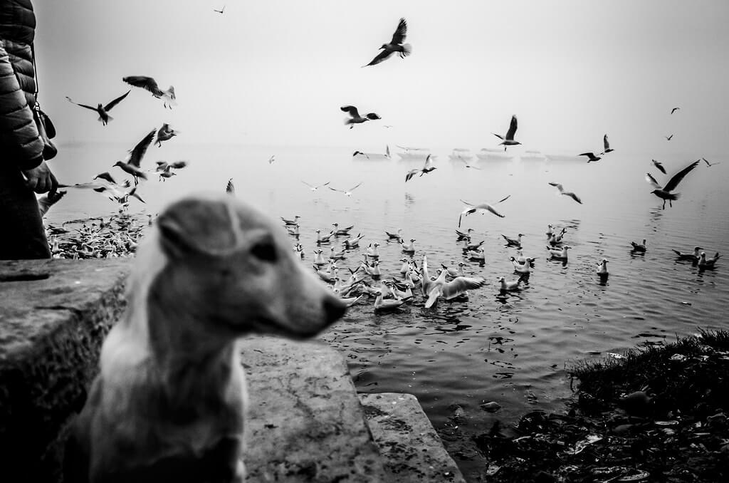 Shirren Lim - seagulls