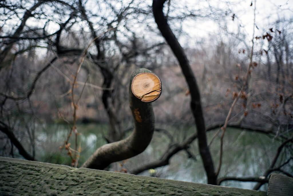 eric kogan - tree trunk