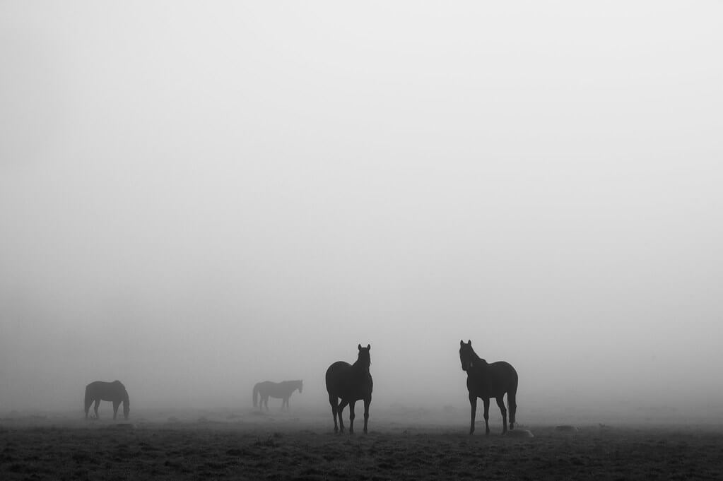 Nathalie - horses in the mist