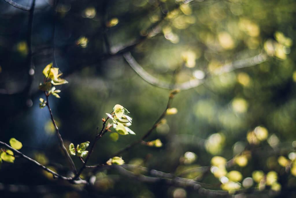 R Casey - spring leaves
