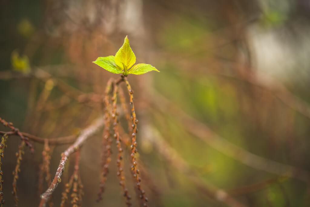 Sheri Elizabeth (Sheri Baker) - green spring leaf