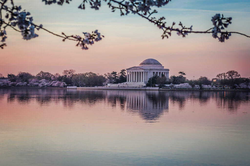 Carina - Cherry blossoms in Washington DC