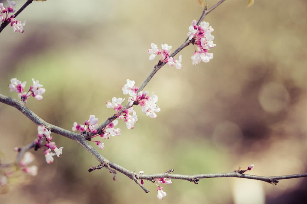 Sheri Elizabeth (Sheri Baker) - Spring blossoms