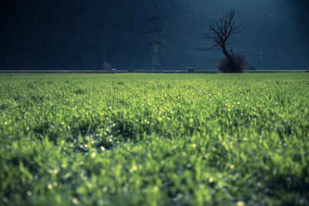 Mundl_Photographie - green grass