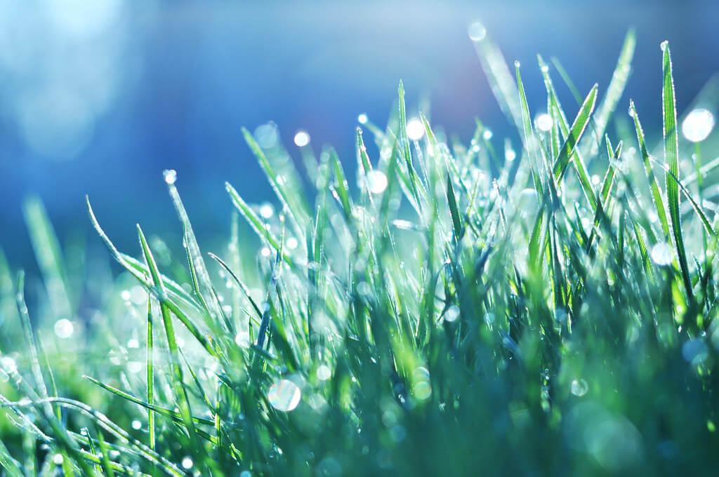 jordan parks - dew on green grass