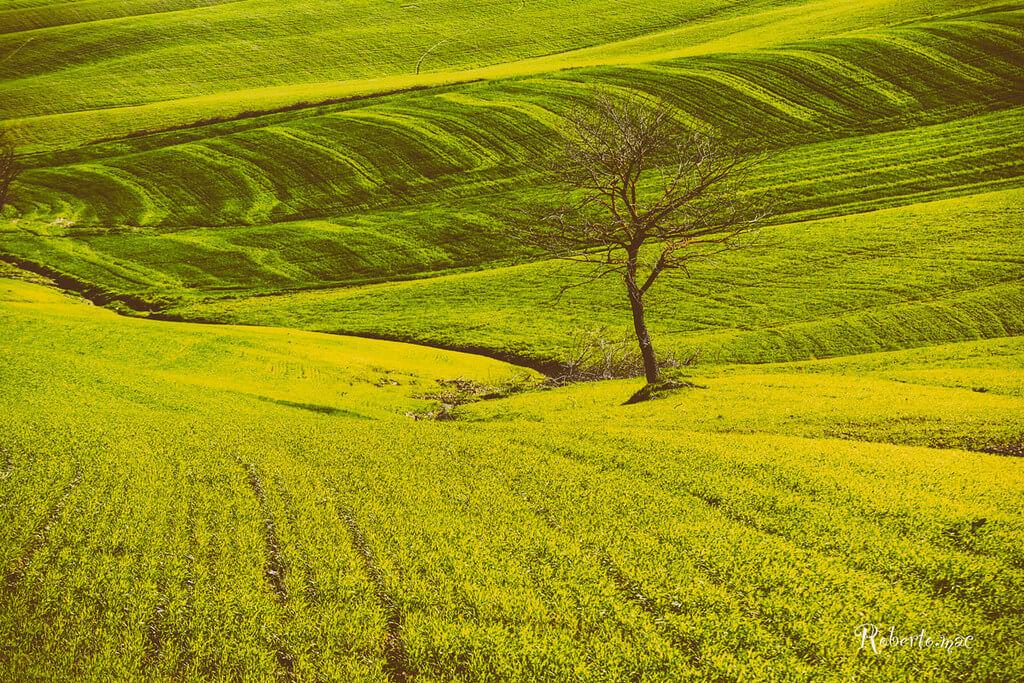Roberto.mac. - bare tree in green field