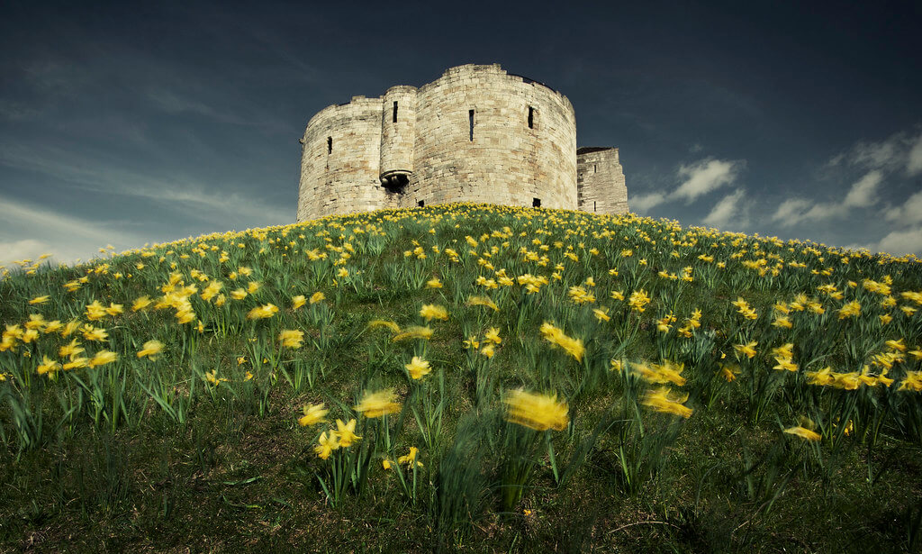 James Drury -Clifford's Tower in spring with daffodils