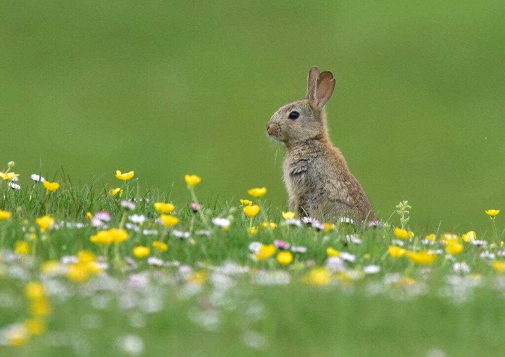 Rosie Chilton - Baby rabbit