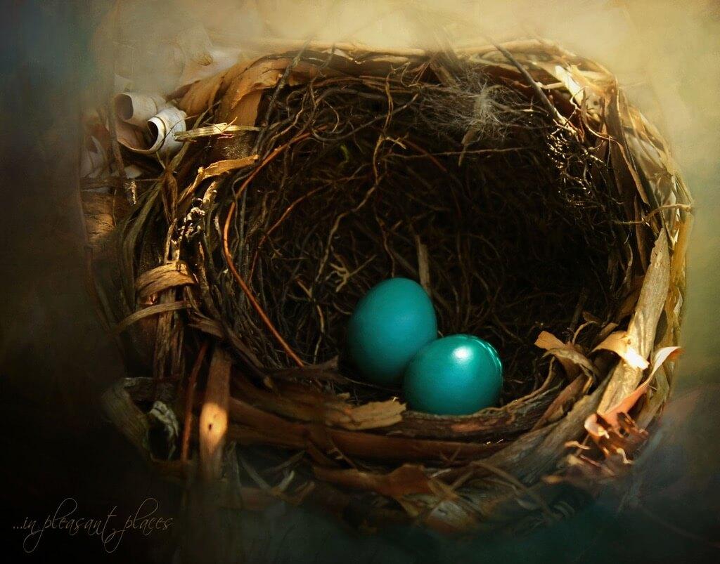 Joanna Kovalcsik - Love Nest