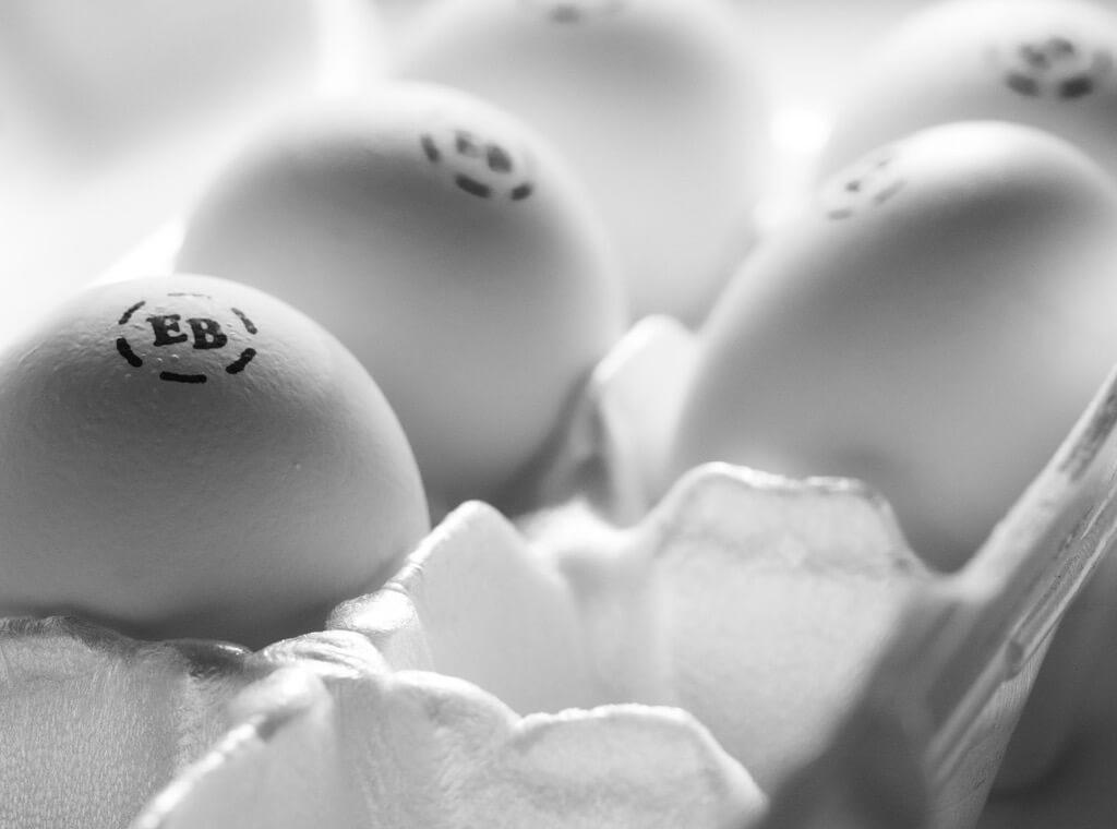 """5张精美的鸡蛋照片"""""""
