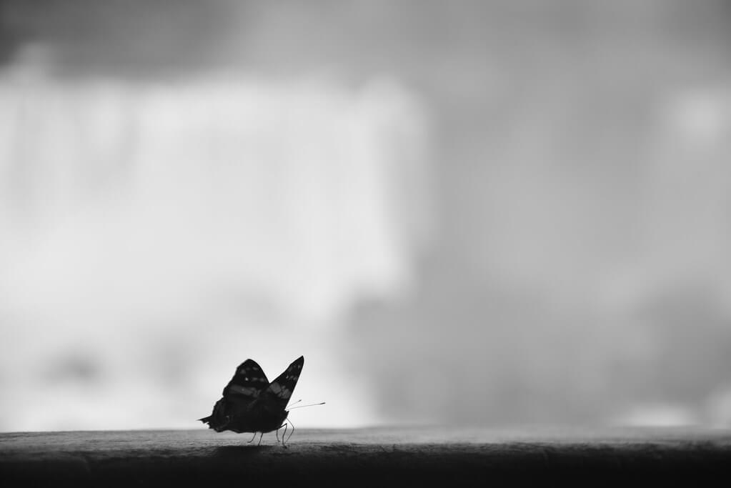 Ignacio Videla Hidalgo - Butterfly monochrome