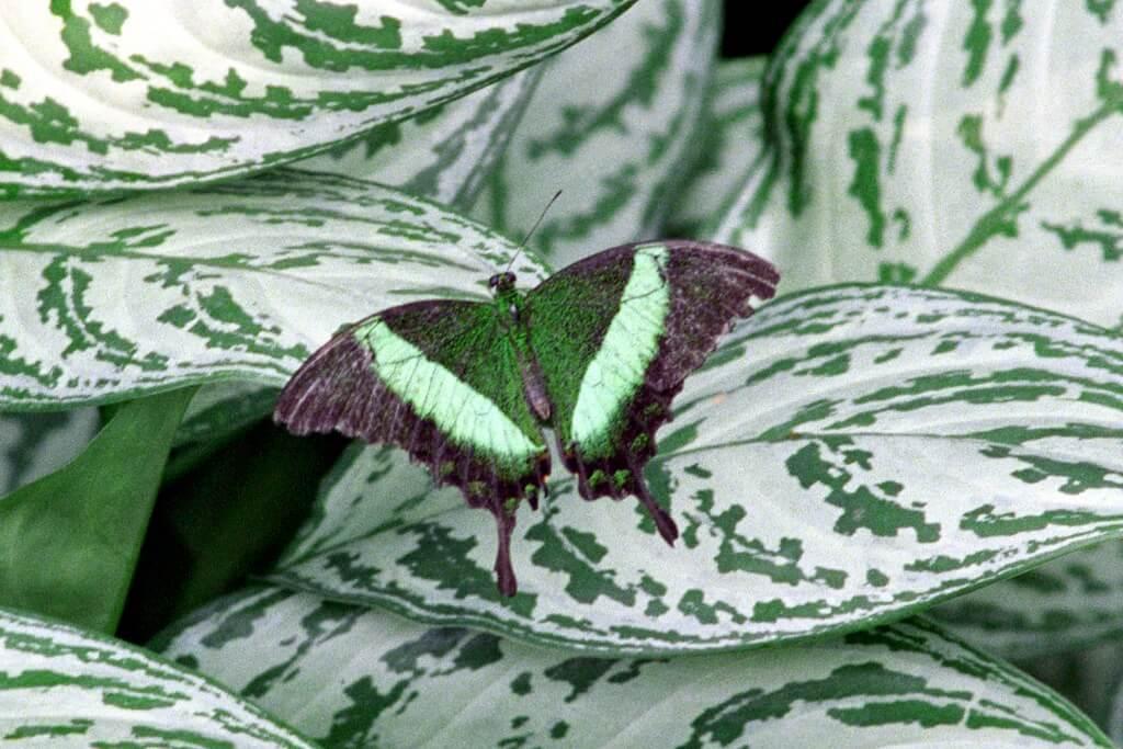 pmvarsa - Butterfly