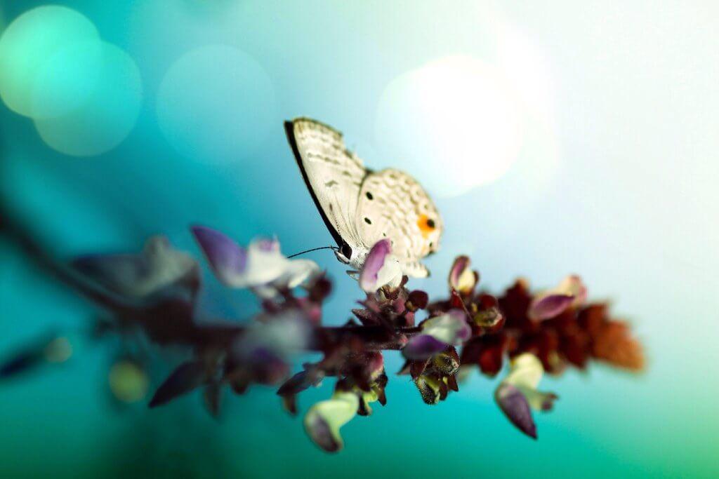 Azfar Nasirudin - Butterfly lens flare