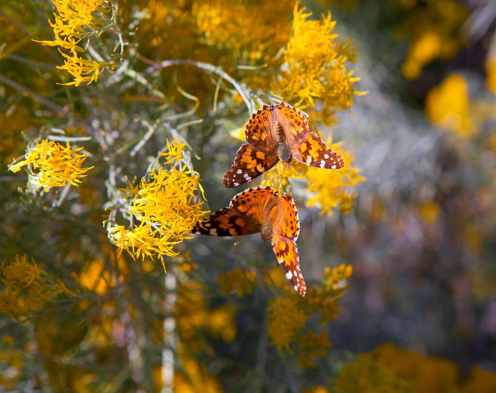 Barbara Schultheis - Abundance of Butterflies