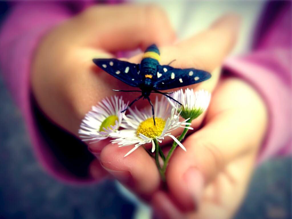 Manuel Buetti - Il fiore e la farfalla