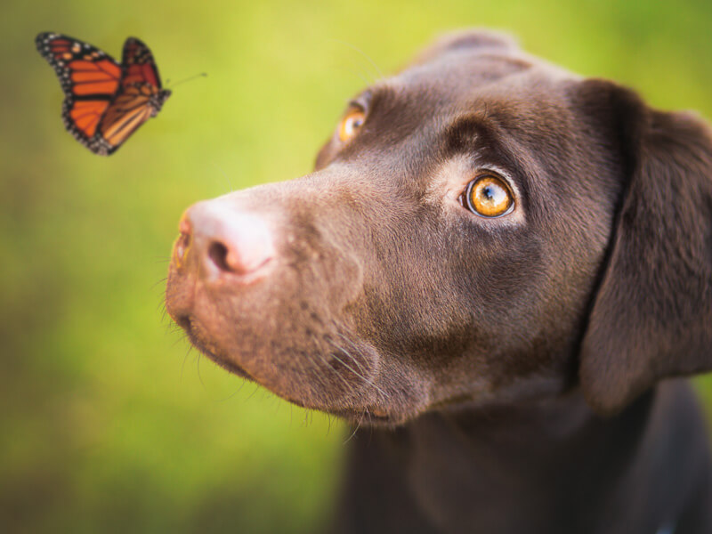 Greig Reid - dog and butterfly