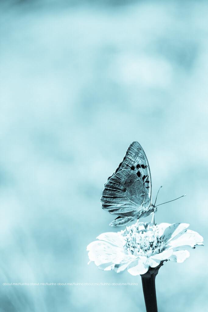 Ana Matos - butterfly