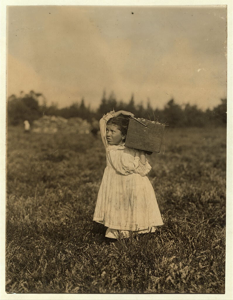 Lewis Wickes Hine - Girl Picking Cranberries