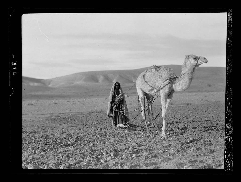 Bedouin women ploughing with a camel
