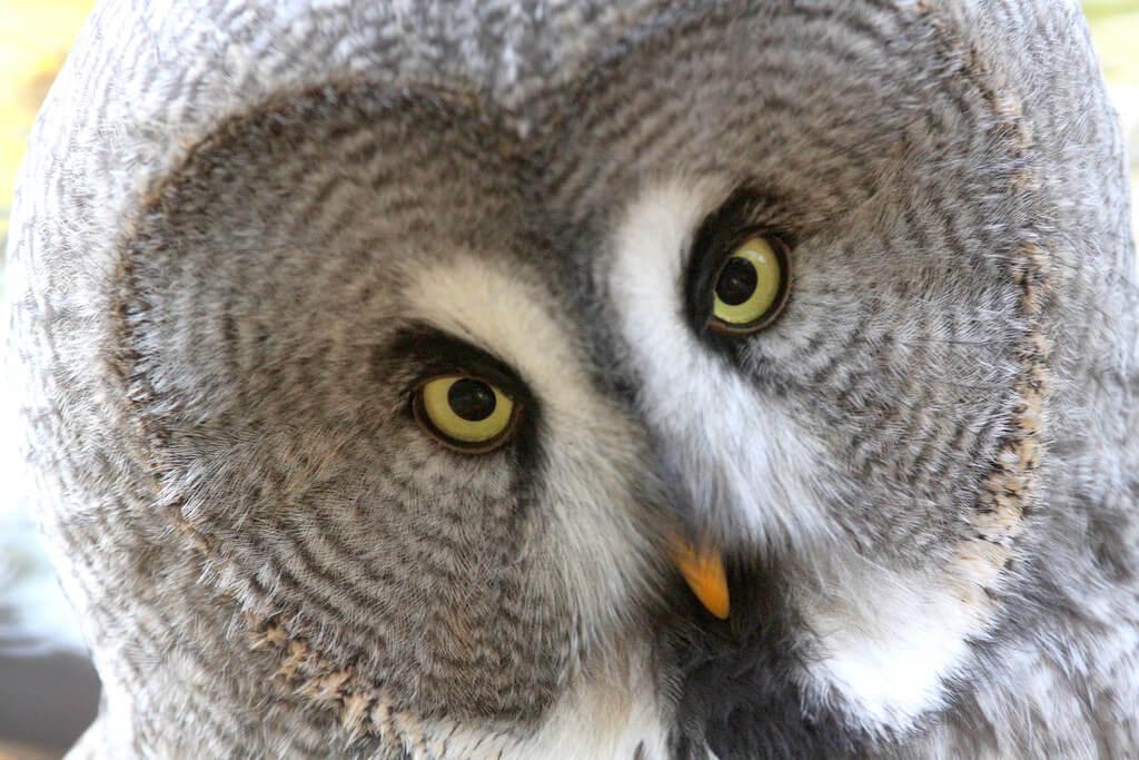 Rolf Dietrich Brecher - owl