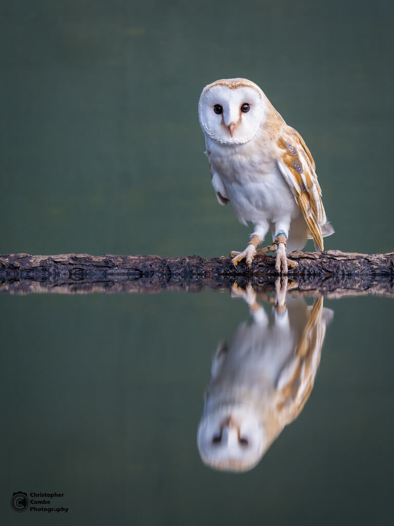 Chris Combe - Owl Reflection