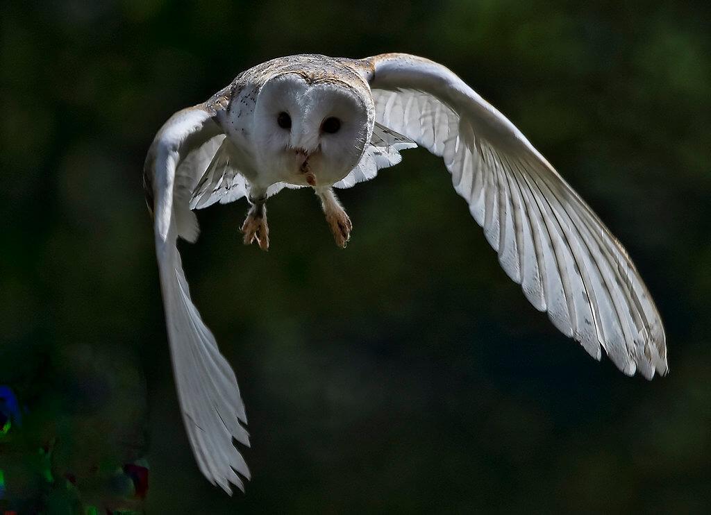 John Knight - Owl