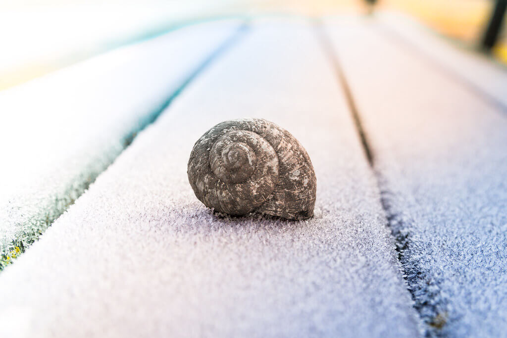 ralfstraßgütl - snail shell covered with frost