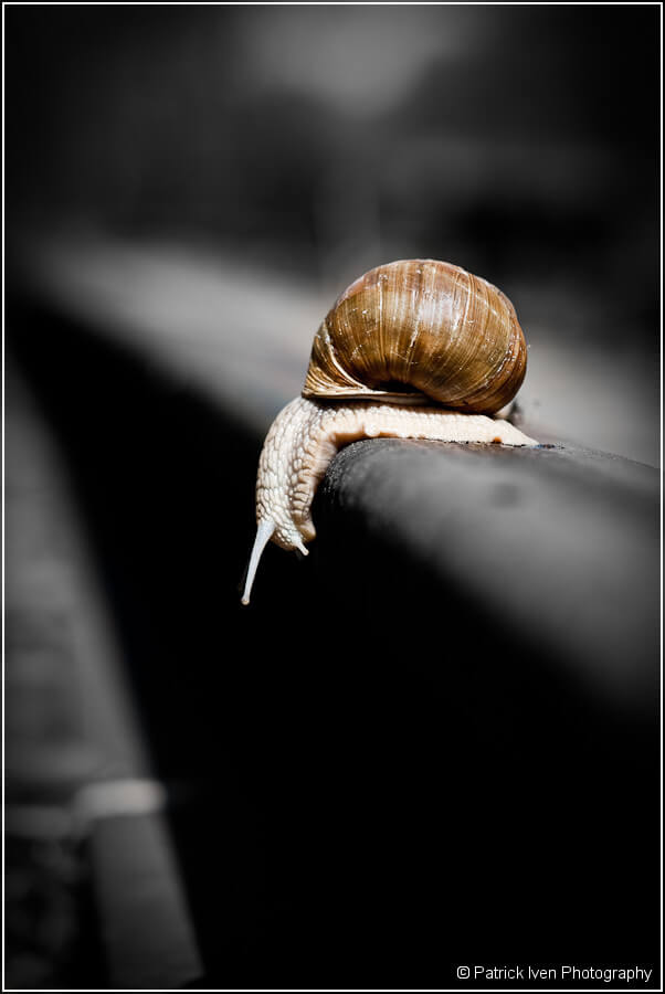 patrickiven - Snail on Rail Road Track