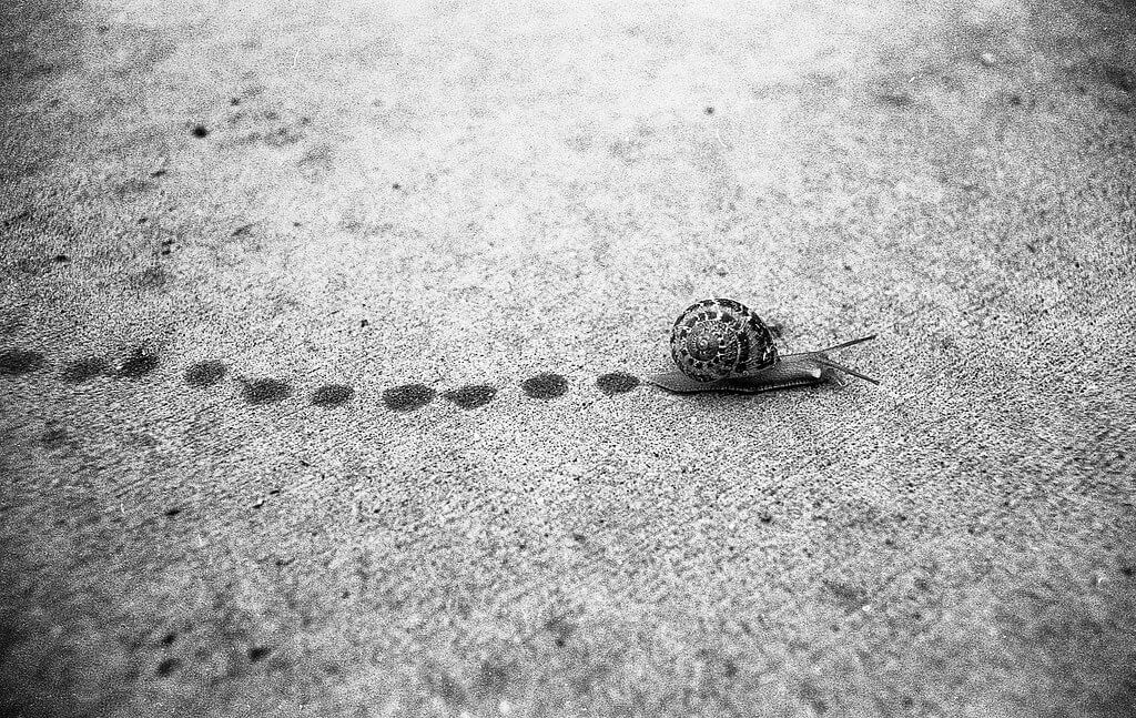 Michael VH - Making Snail Tracks