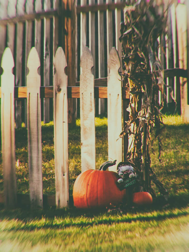 R Casey - pumpkin by fence