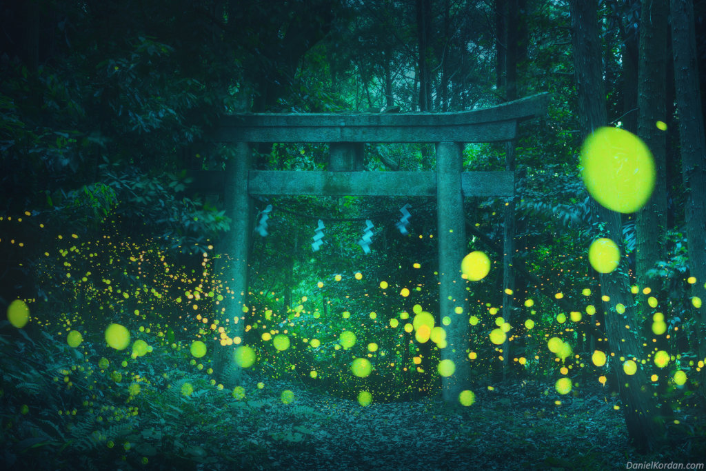 pictures of fireflies feature in Japan