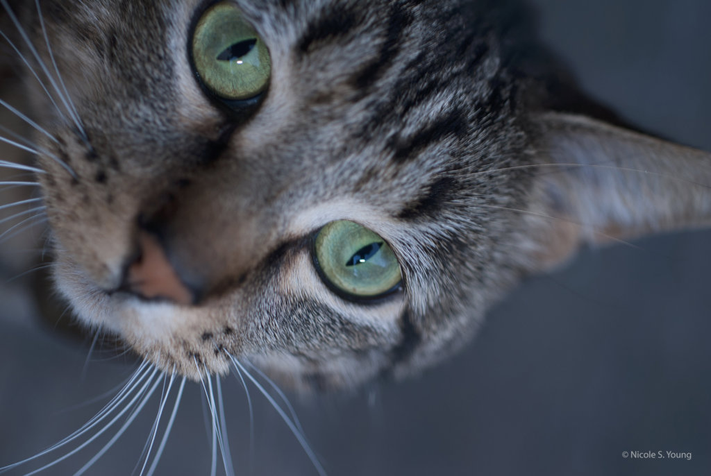 close up of cat's face before